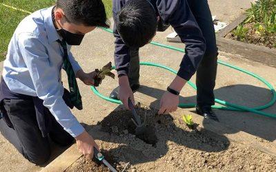 El colegio reserva un espacio para un huerto escolar
